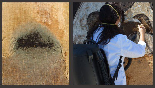 Mold-paintings-art-conservation